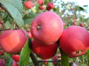 Зав. плоды