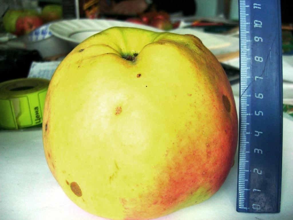 Яблоня подарок садоводам описание сорта фото отзывы 44